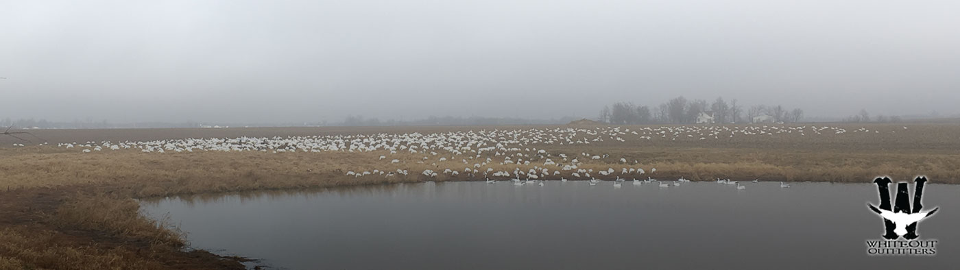 Spring Snow Goose Hunts What To Bring