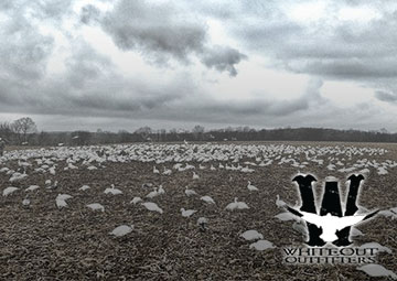 Guided Spring Snow Goose Hunts